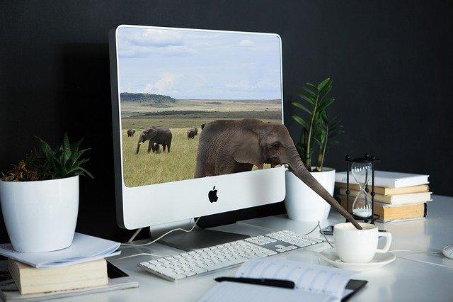 sloni na monitoru