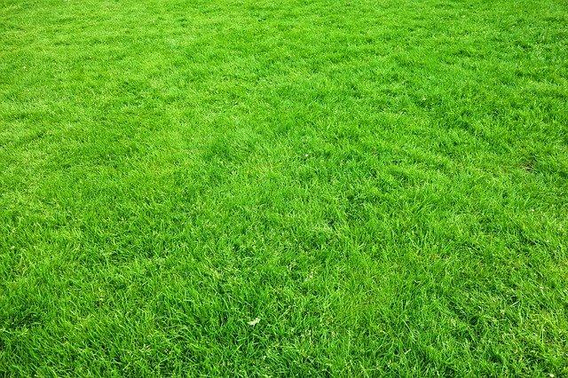 zelený trávník
