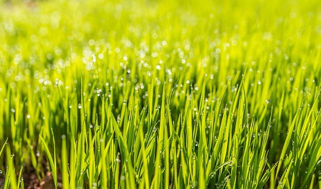 mokrá tráva