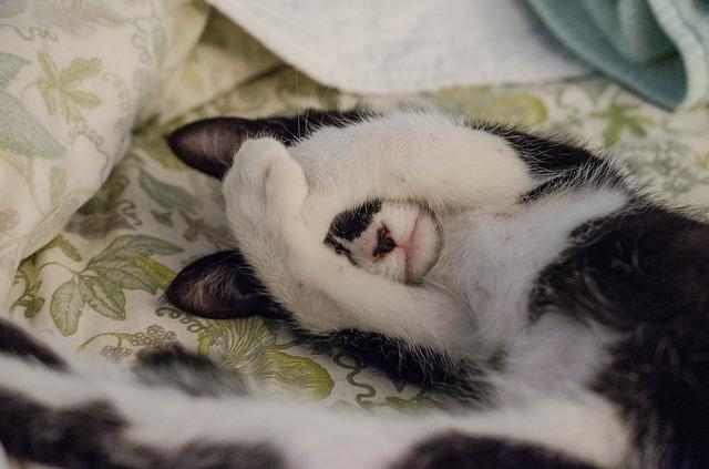 kočka v posteli.jpg